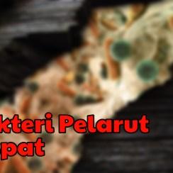 Bakteri pelarut Fospat
