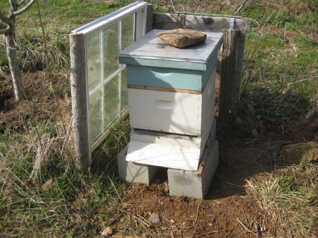 one of the hives.  it is next to a pear tree which provides sun protection and the window wind protection in the winter.  both hives face south