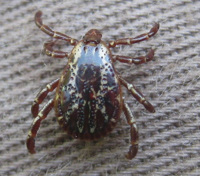 a local tick - there are lots around and my high grass and excessive vegetation doesn't help