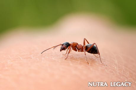 Can Carpenter Ants Bite People