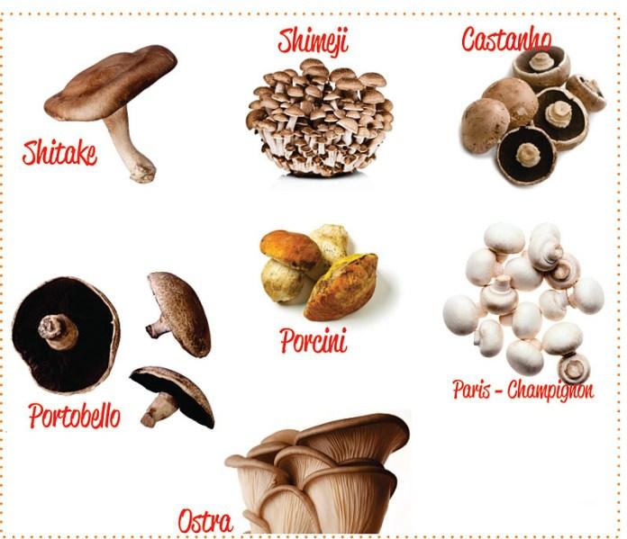 cogumelos_comestiveis