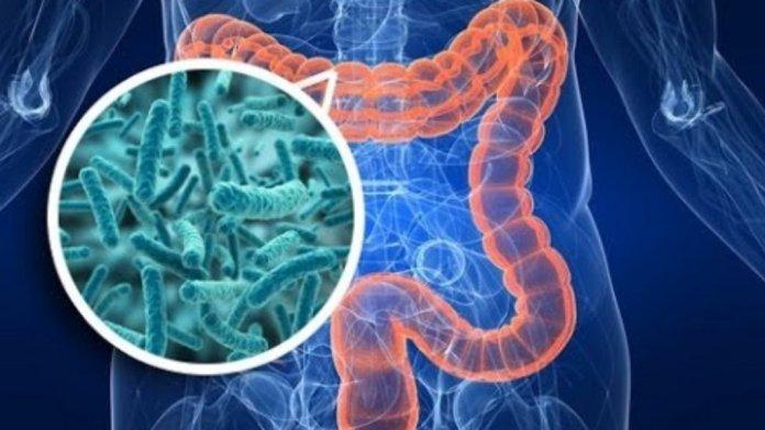 detoxficicação do intestino