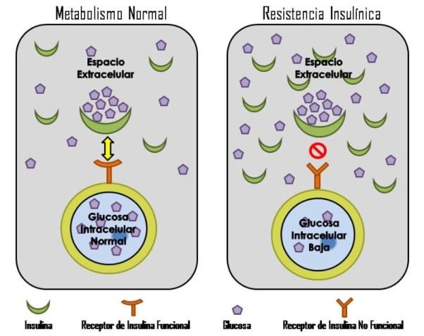 foto resistencia insulina