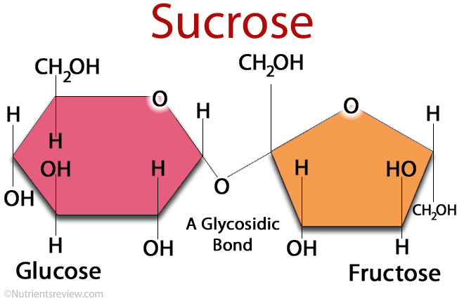 Chemical structure of sucrose