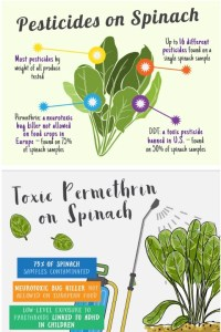 pesticidas en espinacas