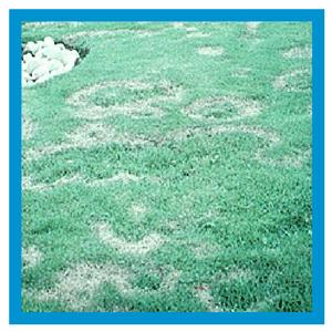 Turfgrass Diseases