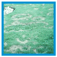 Turfgrass Diseases