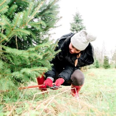 Carnation Christmas Tree Farm