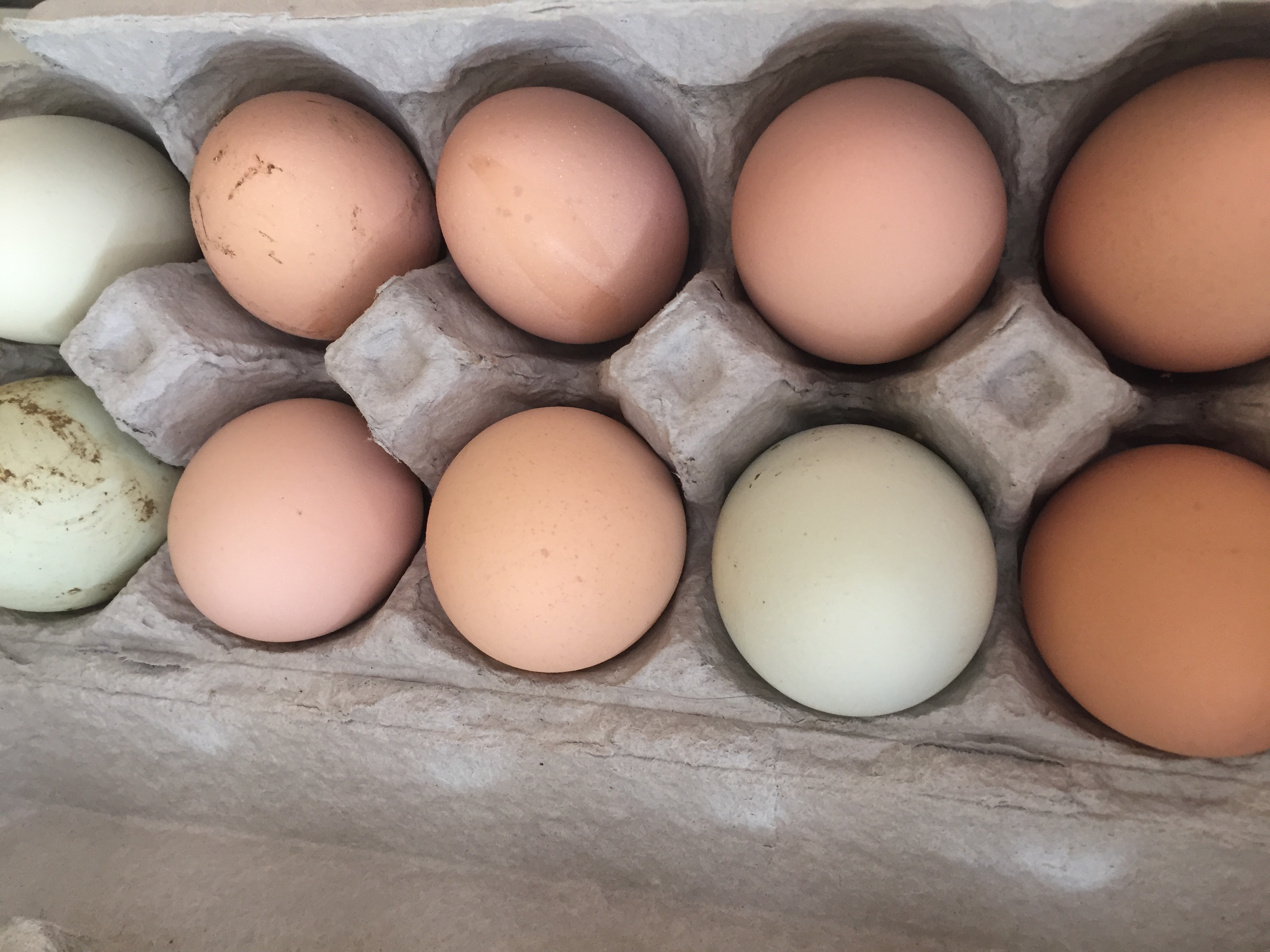 Real eggs from local farm come in different colored shells, too!