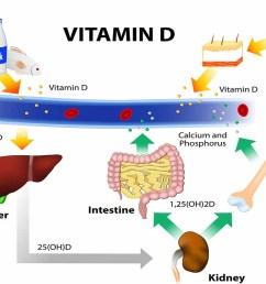 a diagram showing how eggs milk and fish are vitamin d sources  [ 1100 x 750 Pixel ]