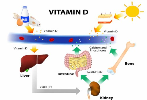 small resolution of a diagram showing how eggs milk and fish are vitamin d sources