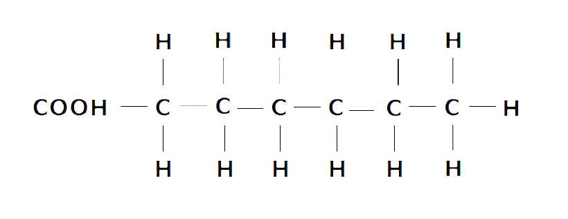 fat structure diagram parts of an insect types a complete guide to fatty acids nutrition advance showing the molecular carbon and hydrogen atoms saturated