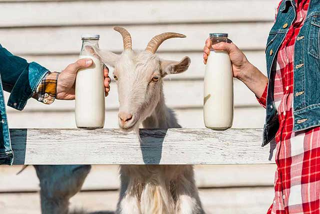 goat milk is it
