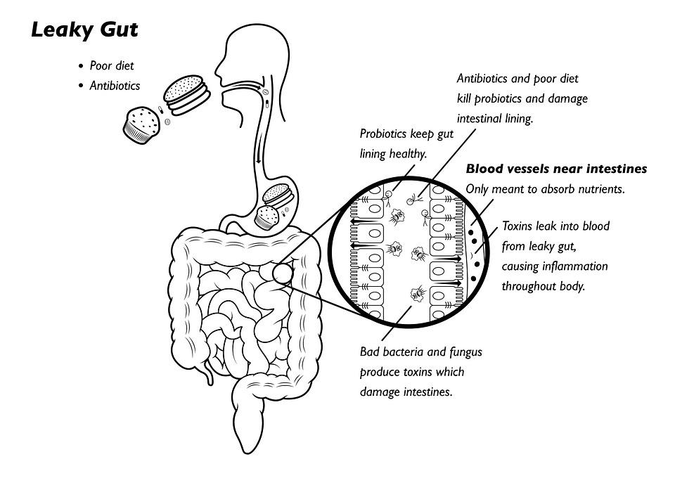 diagram of nutrition