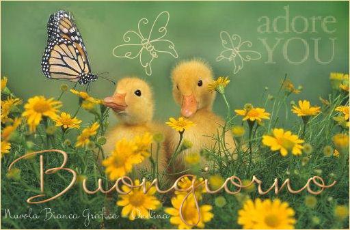Cartoline buongiorno