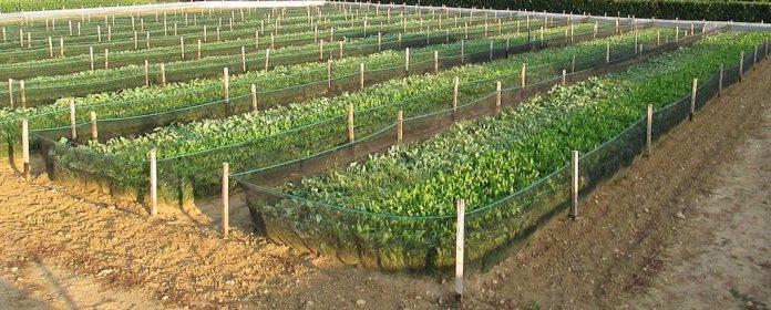 campi coltivazione lumache