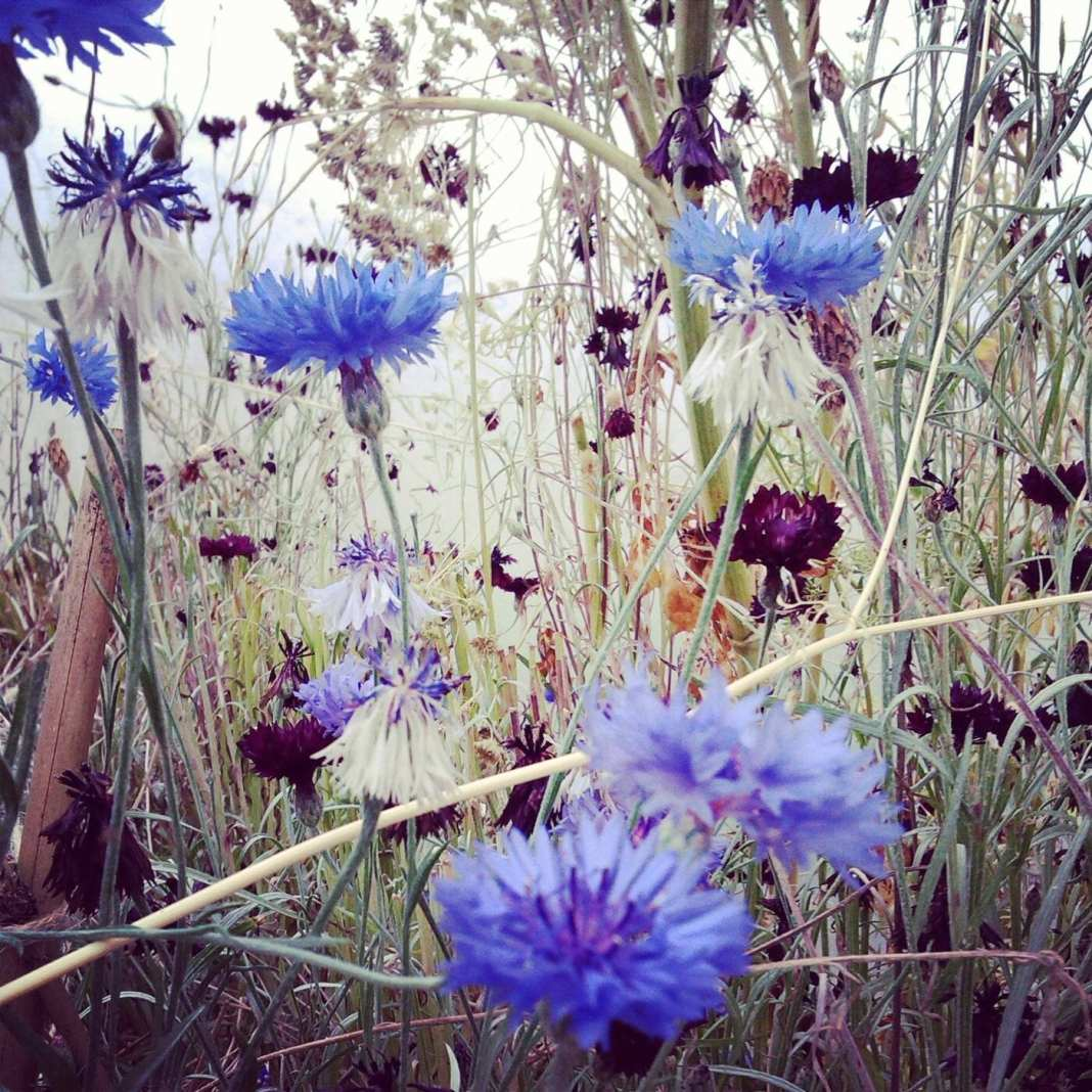 Amly Botanicals