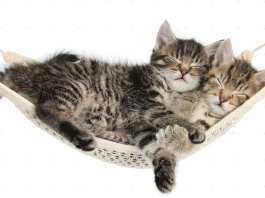 Amache per Gatti
