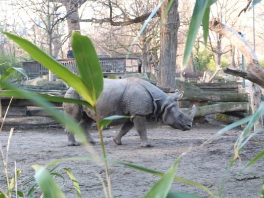 Zoo de Schonbrunn