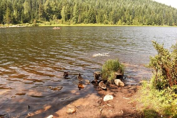 Trillium Lake Mt Hood National Forest