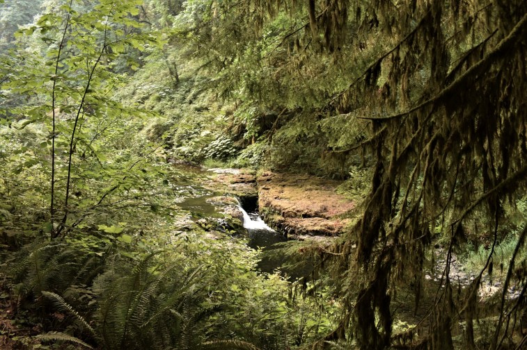 Ten Falls Trail - Silver Falls SP