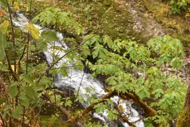 Drake Falls - Silver Falls SP