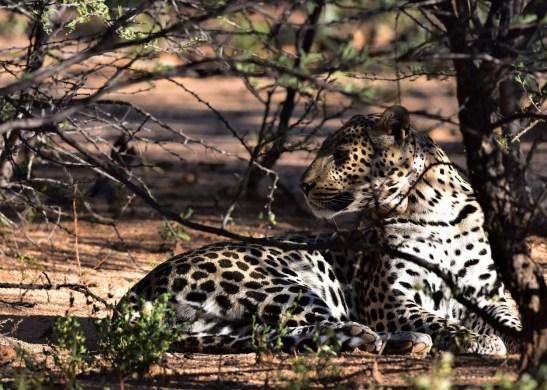 Okonjima Natural Reserve