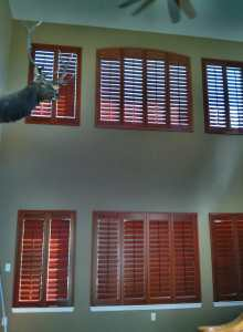 Hunter Douglas Shutters in Highlands Ranch CO living room