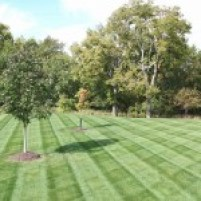NVS-Landscaping-Lawn-Mowing-01