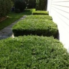 NVS-Landscaping-Trimming-Pruning-01