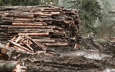 Lumber Prices on the Rise – Again