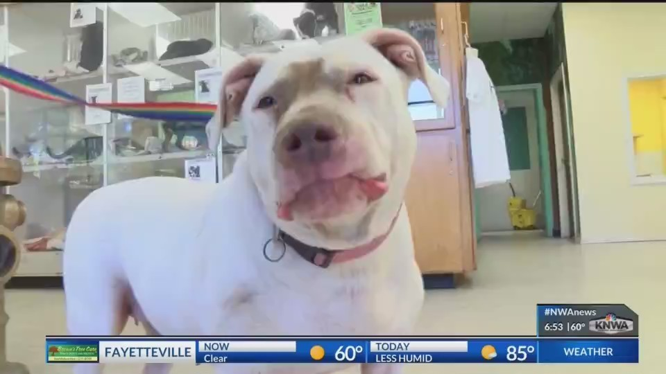 Pet_of_the_Week_Miss_Abby_0_20180622125403