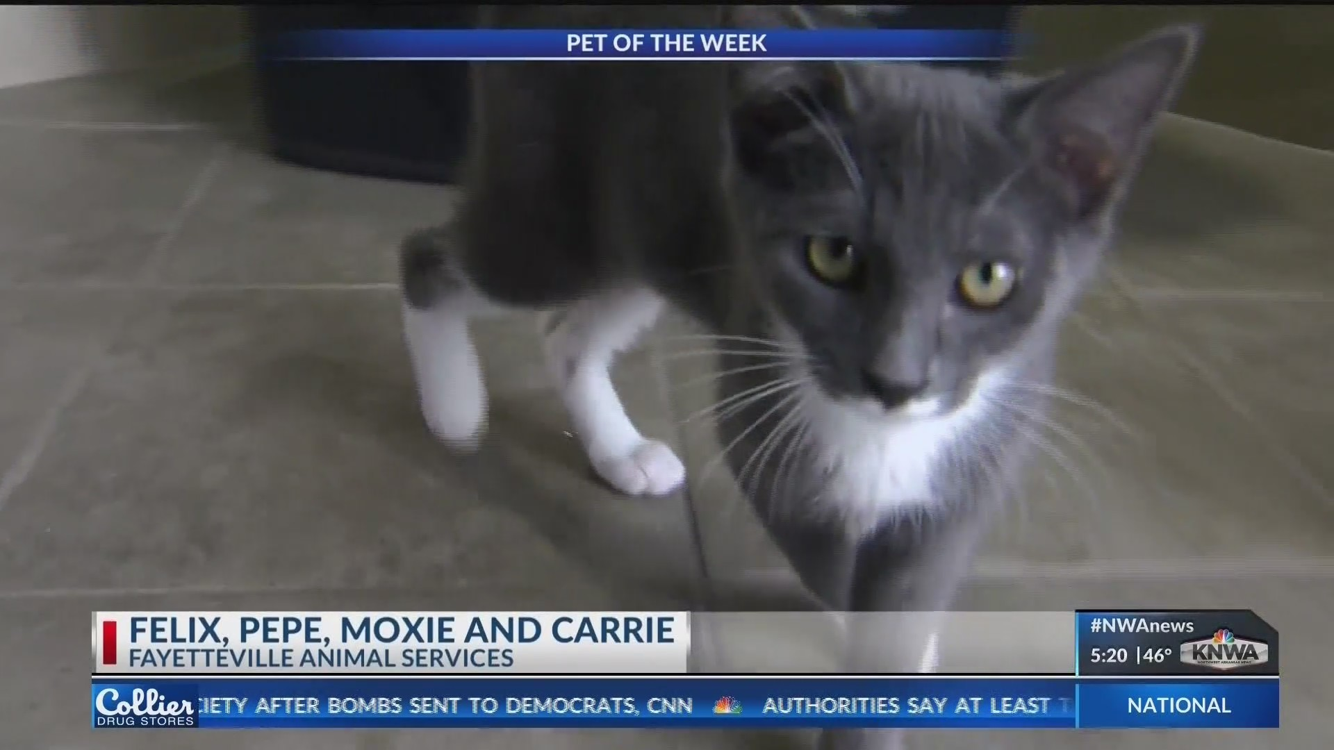 Pet_of_the_Week__Felix__Pepe__Moxie_and__1_20181026134216