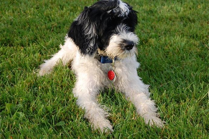 Fayetteville Animal Shelter Waives Dog Adoption Fee Sat., Sept. 10_-2909071526538034525