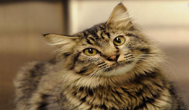 Craigslist Cats_1557607370608.JPG.jpg