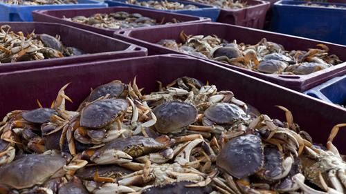 https://i0.wp.com/www.nwasianweekly.com/wp-content/uploads/2015/34_49/com_crab.jpg