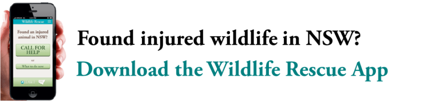IFAW Wildlife Rescue App website