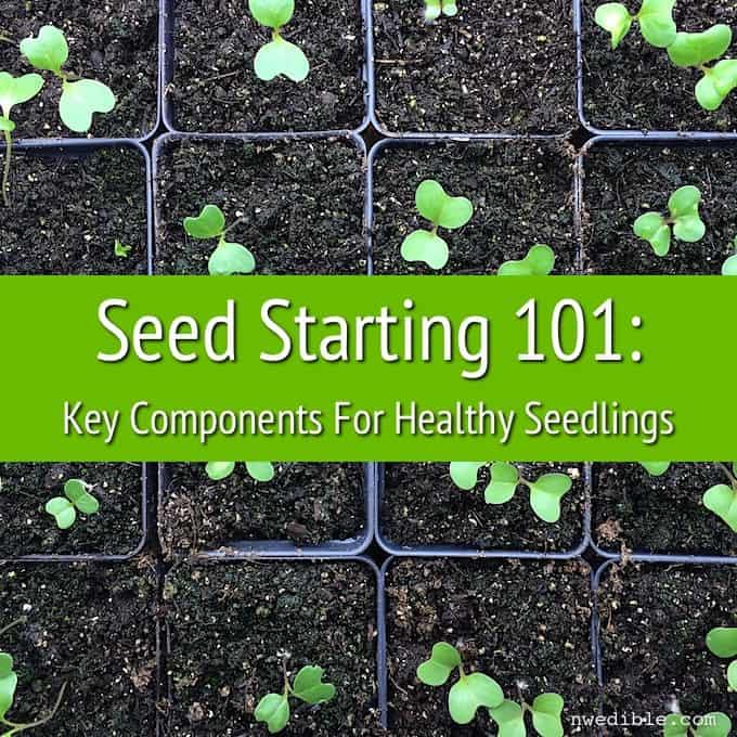Seeds 101-1
