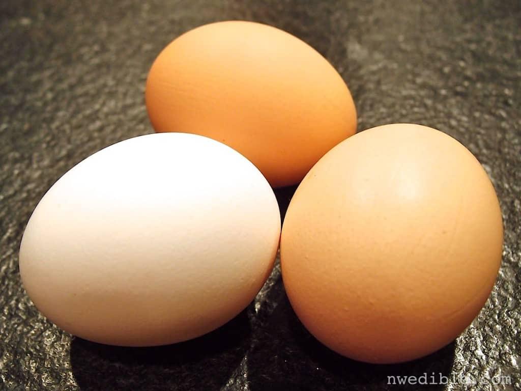 Backyard vs Store Eggs52