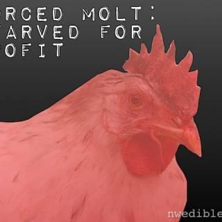 Forced Molt