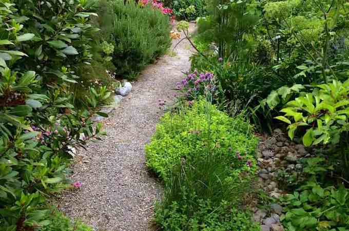 The main garden path - fruit and herbs line both sides.