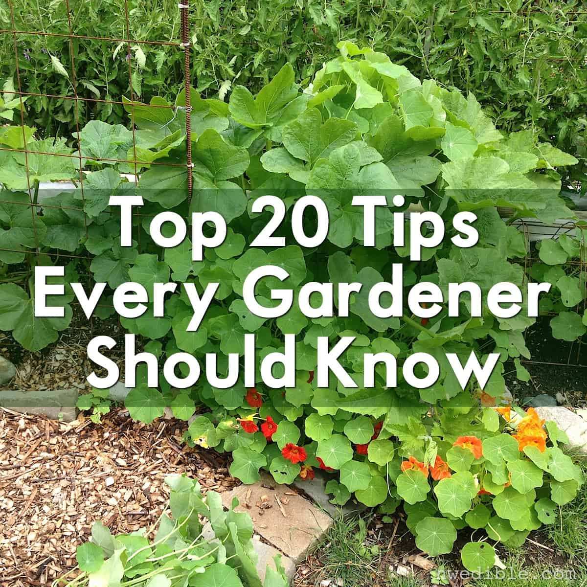 Simple Vegetable Garden Ideas For Your Living: Top 20 Tips Every Gardener Should Know