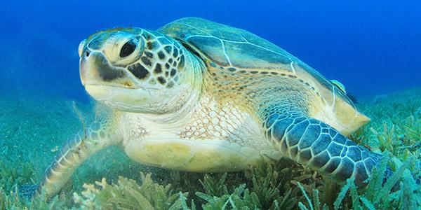 leatherback sea turtle food web diagram basic lighting green national wildlife federation