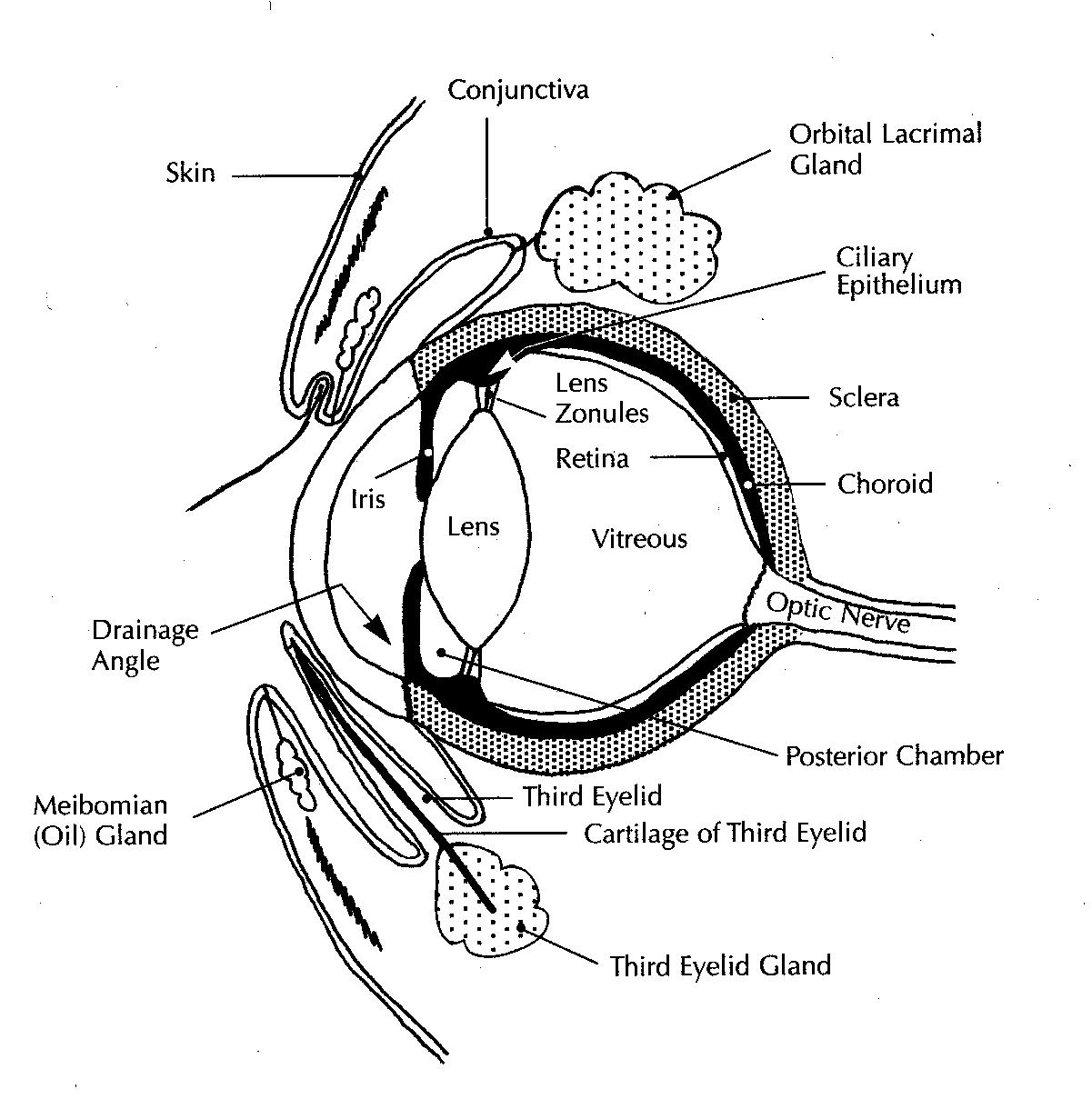 horse gi diagram rtd wiring anatomy database tract small intestine of the