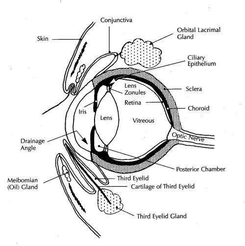 small resolution of eye diagram