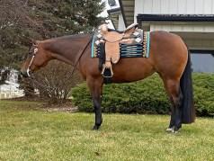 NoDoubtInRhythm_1 Pro Horse Services