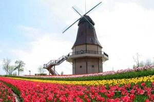 霞ヶ浦総合公園の風車付近|土浦花火大会のおすすめの穴場スポット