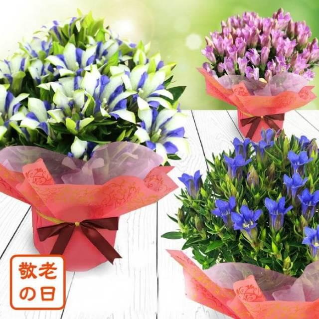敬老の日に花をプレゼント!どんな花の種類が人気?