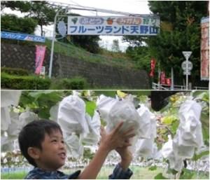 フルーツランド天野山|大阪府のぶどう狩りが出来る農園