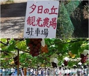夕日ヶ丘観光農場 大阪府のぶどう狩りが出来る農園